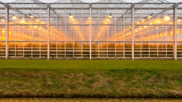 https://mugglehead.com/wp-content/uploads/2019/01/commercialgreenhouse-640x360.jpg