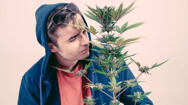 https://mugglehead.com/wp-content/uploads/2019/04/smellingmarijuana-640x360.jpg