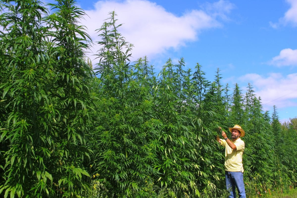 CBD Regulation Changes Would Boost Hemp Industry