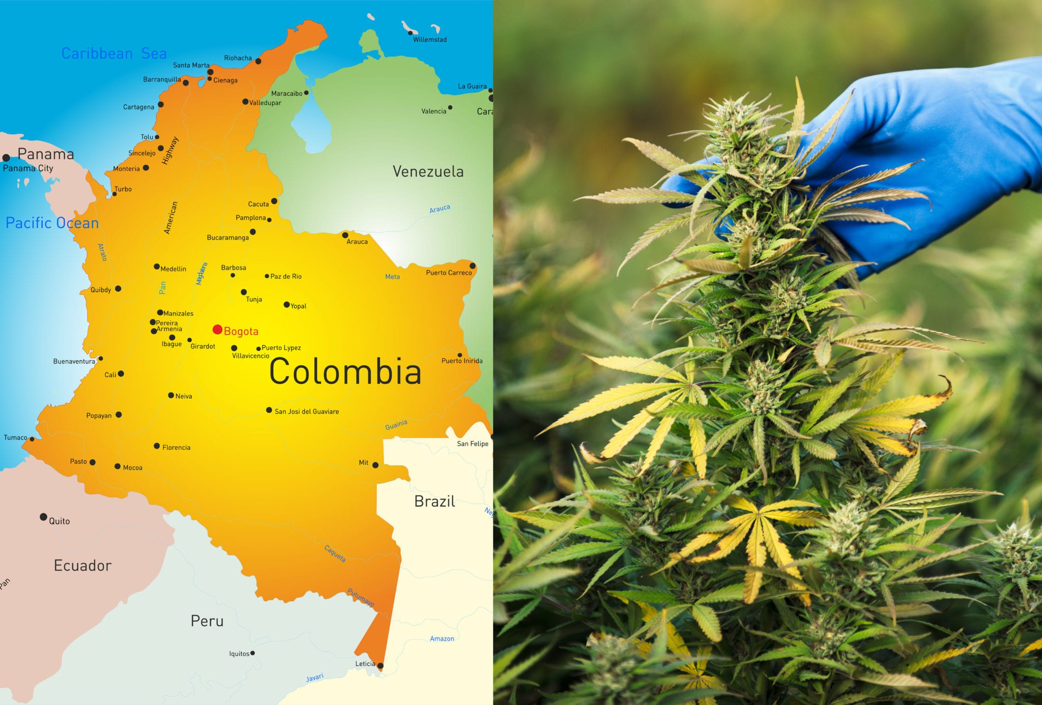 The South American nation legalized medical marijuana three years ago, and last week Colombia's Constitutional Court lifted the ban on public cannabis consumption signalling the country, noted for ideal growing conditions and huge export potential, is closer to complete legalization of the drug.
