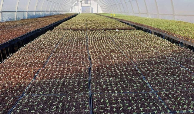 48North Building Major Extraction Facility, Finishes Planting Outdoor Cannabis Crop