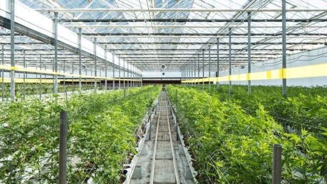 https://mugglehead.com/wp-content/uploads/2019/07/REIT-properties-cannabis-e1562290567709-640x360.jpg