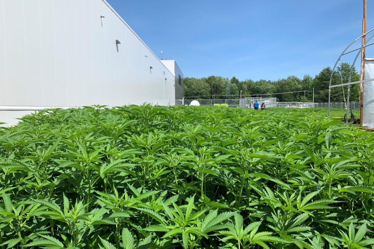 Aurora Cannabis Awarded Licences For Two Outdoor Growing Facilities