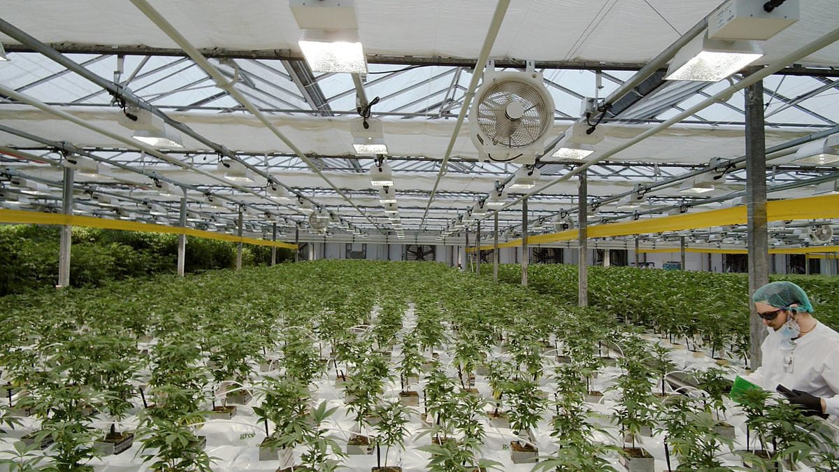 Will CannTrust Be Acquired by Another Cannabis Producer?