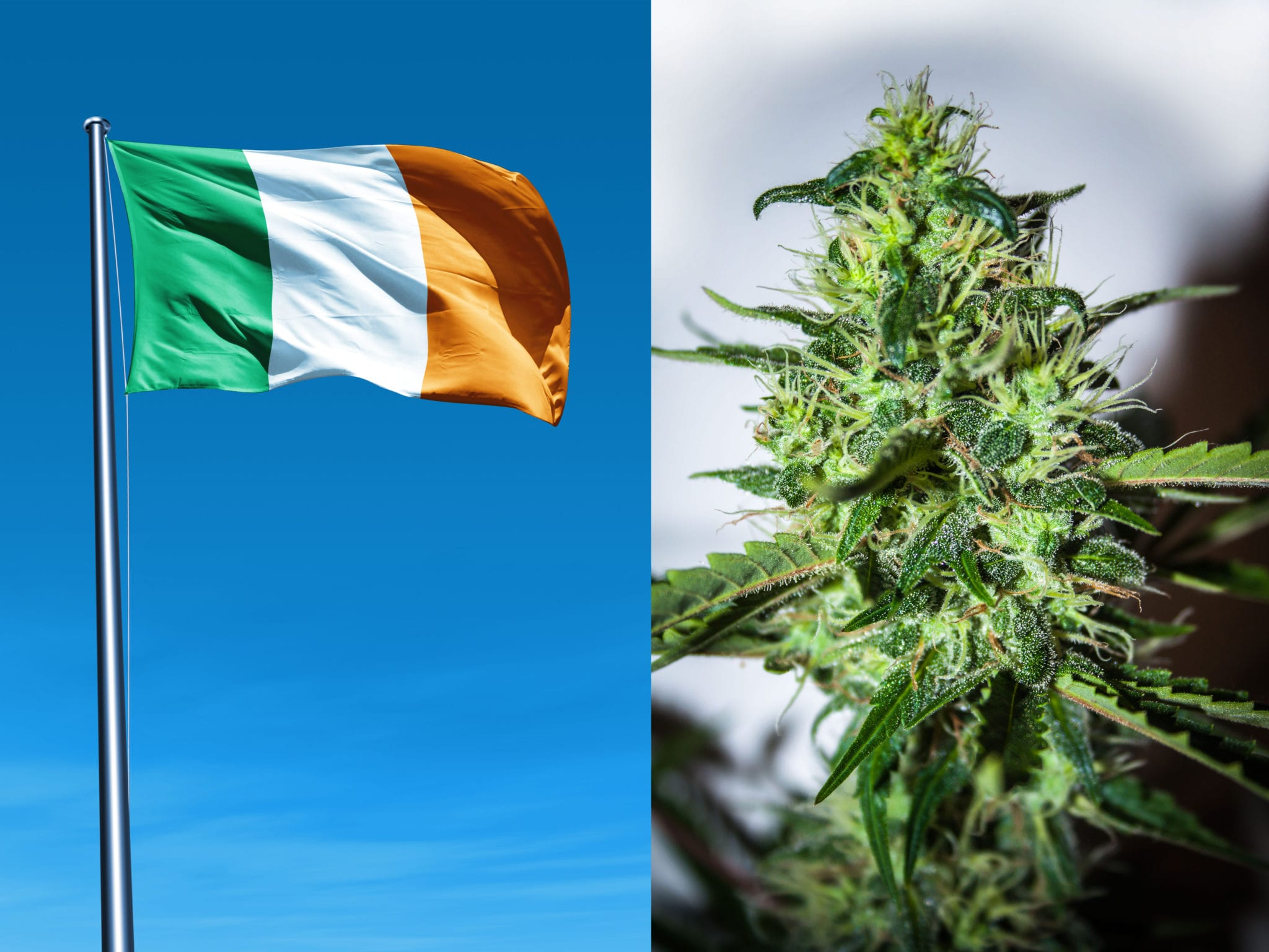 Ireland's Health Minister signed legislation last week which will allow citizens to gain limited access to medical cannabis under a pilot program that will last five years.