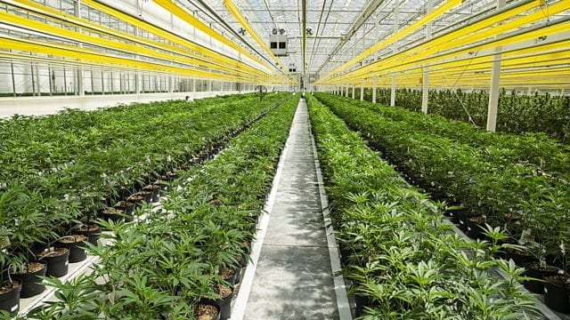 Aphria First Canadian Cannabis Company to Post a Profit on $129M Q4 Revenue
