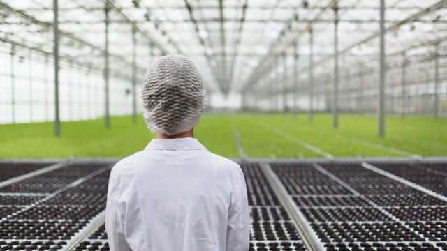 https://mugglehead.com/wp-content/uploads/2019/08/Aphria-Greenhouse-EDIT-640x360.jpg