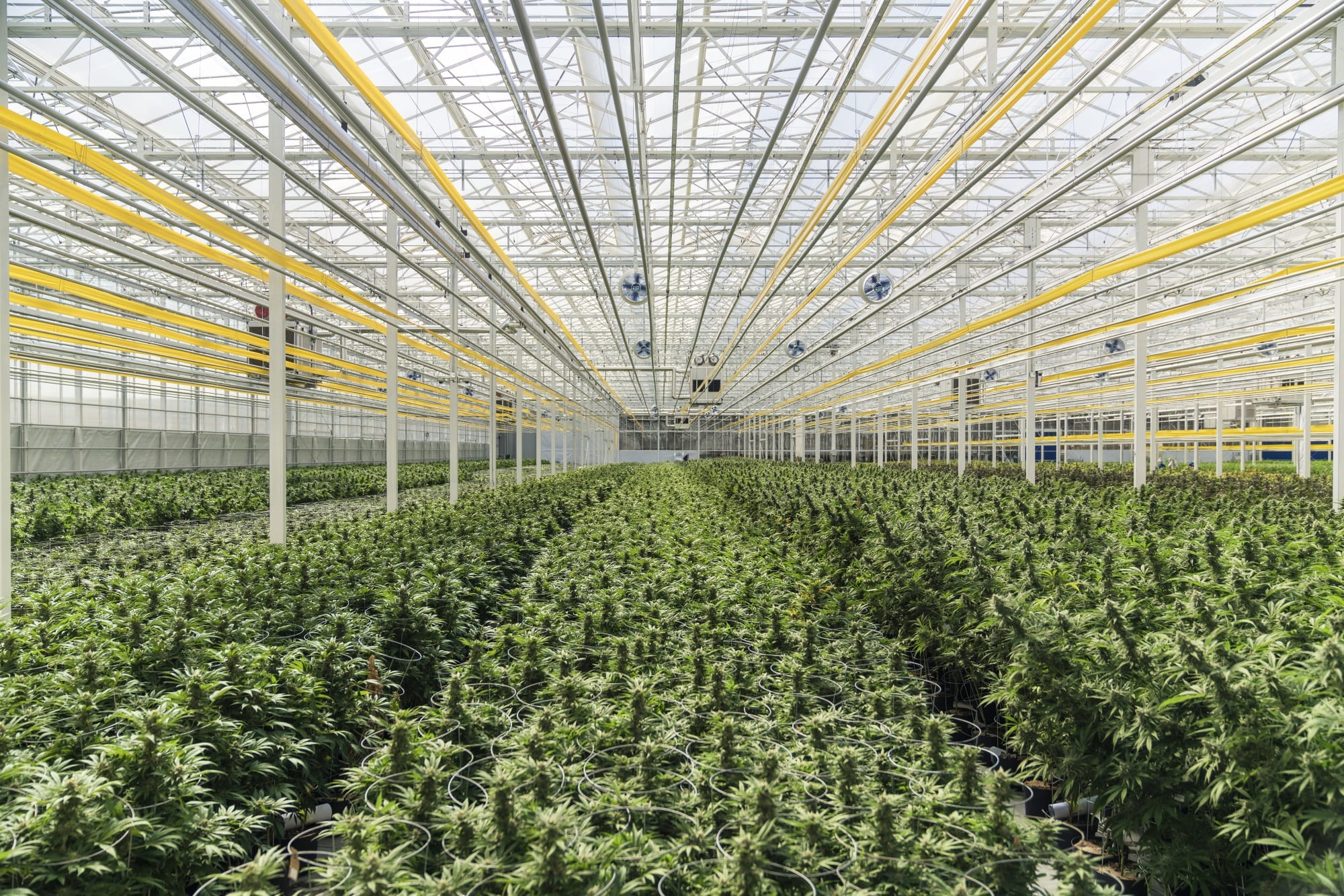 Is Aphria Looking to Buy CannTrust's Assets?