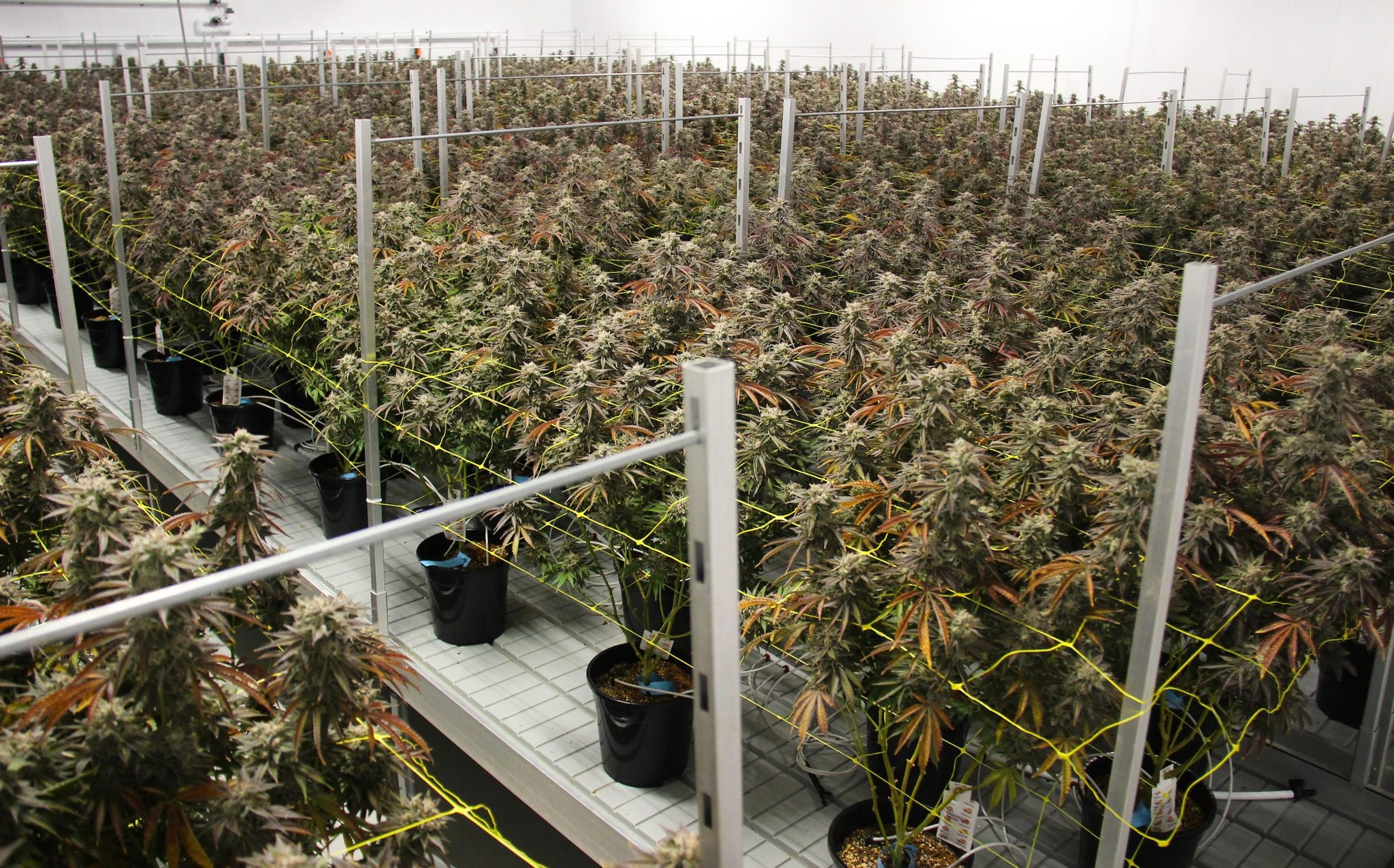 Canopy Growth Q1 $90.5 Million Revenue Falls Short of Expectations