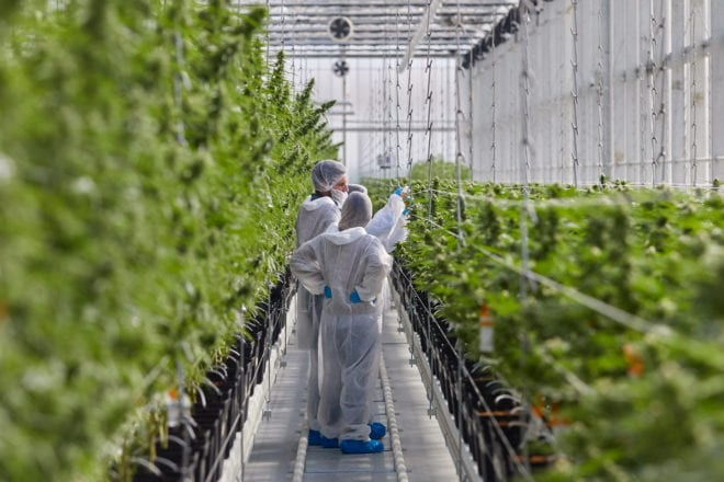 Tilray Slides On US$35-Million Q2 Loss Despite Revenue Beat