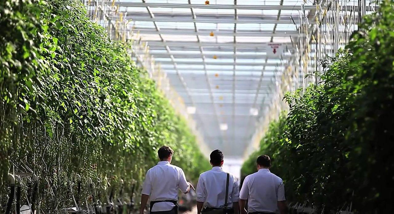 VFF Stock: Village Farms Slumps 17% On poor Quarterly Earnings