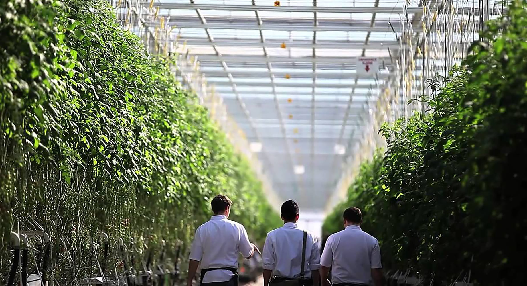 Village Farms buys 100% ownership of Pure Sunfarms for $80M
