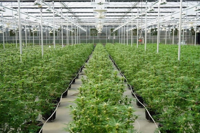 Aurora Cannabis Shares Tumble as Q4 Results Miss Company's Own Guidance