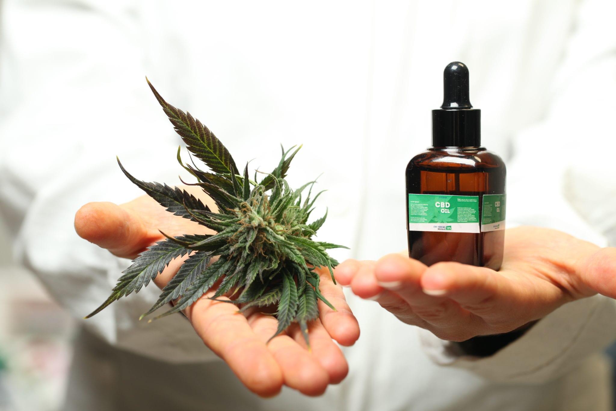 Cannabis to treat pain ASA survey