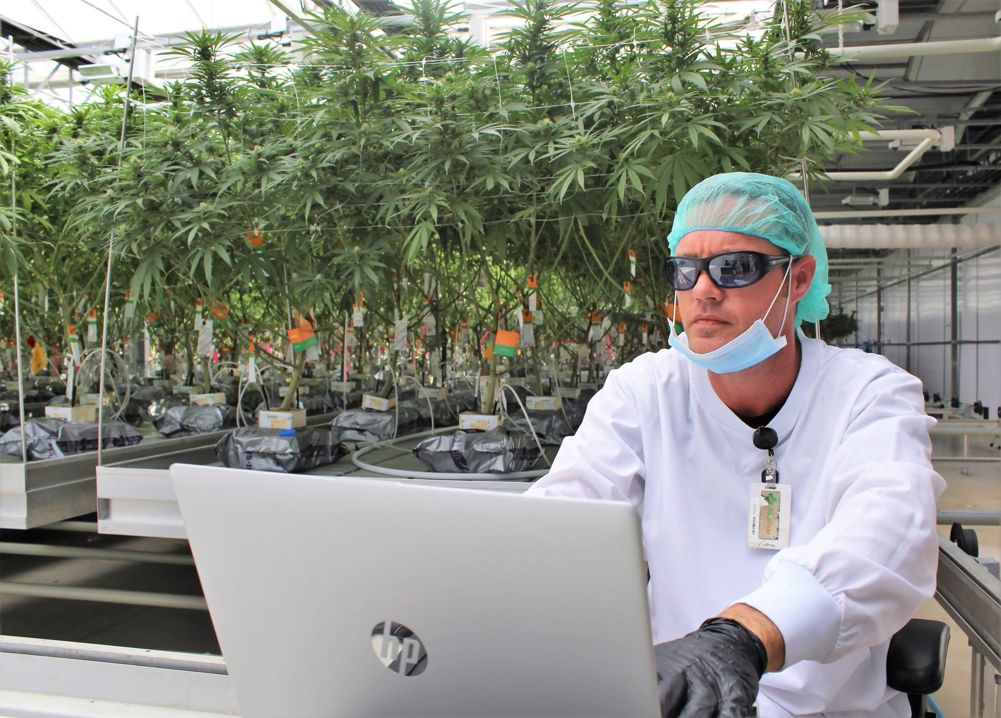 CannTrust to Destroy $77 Million Worth of Cannabis to Regain Compliance
