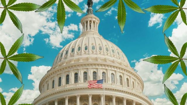 https://mk0muggleheadfl9s2sr.kinstacdn.com/wp-content/uploads/2019/09/congress-cannabis-edit-3-640x360.jpg