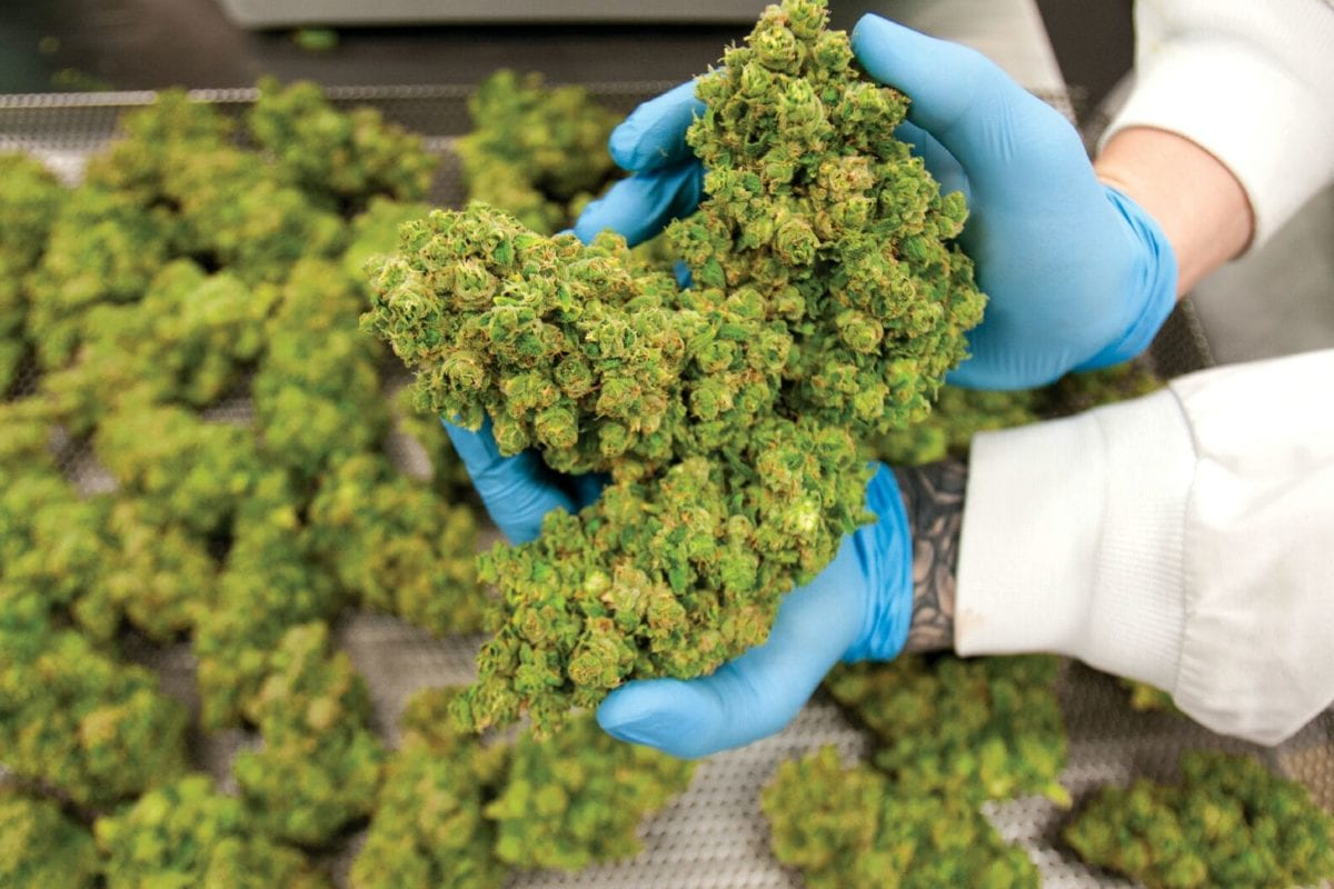 Despite Summer Selloff, Eight Capital Still Bullish on Cannabis Sector