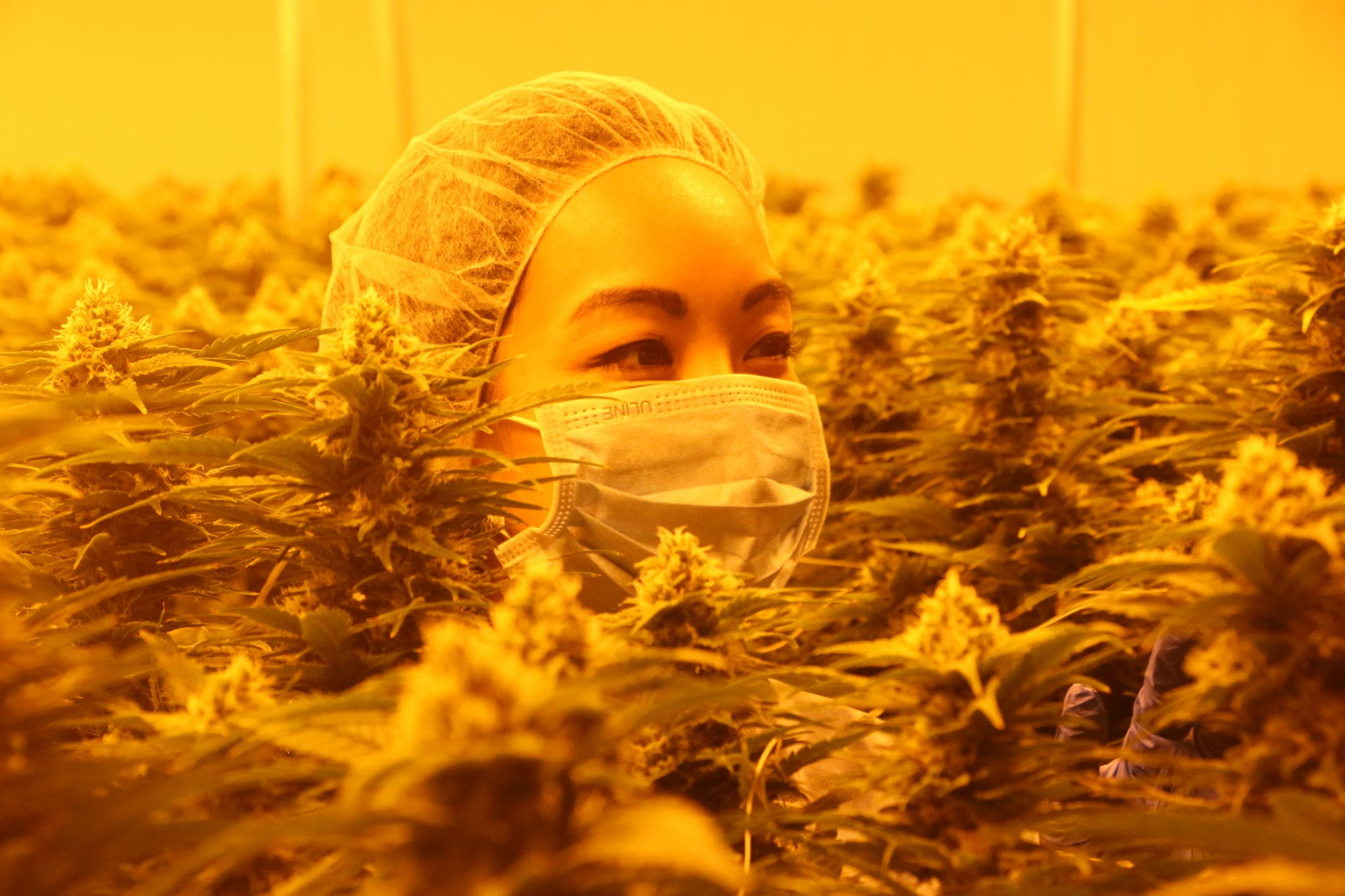 TREC Brands Delivers Socially Conscious Pot, Shortlisted for Two Canadian Cannabis Awards