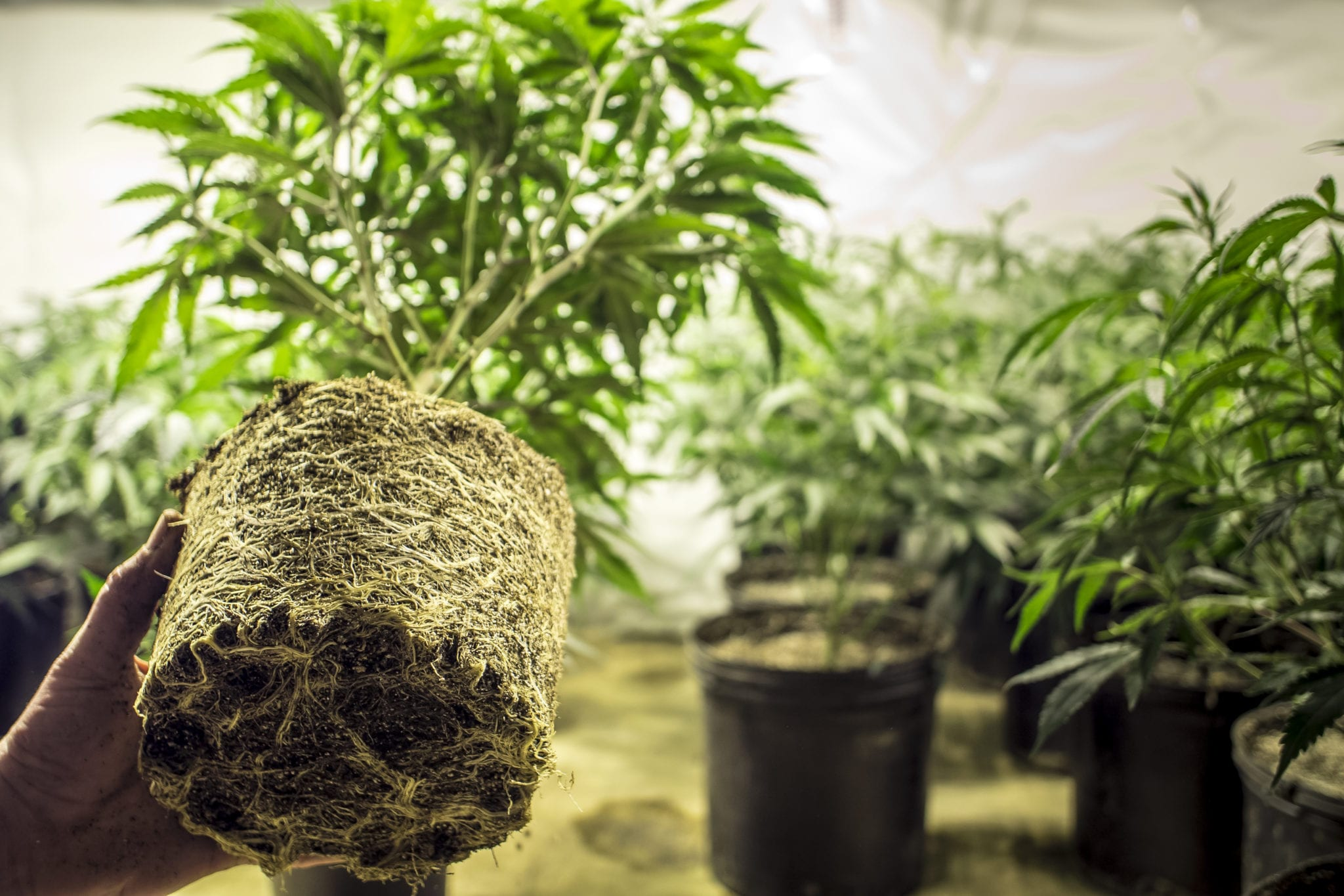 Vacant Ontario Auto Parts Plant Given Second Life With New JWC Cannabis Cultivation Facility