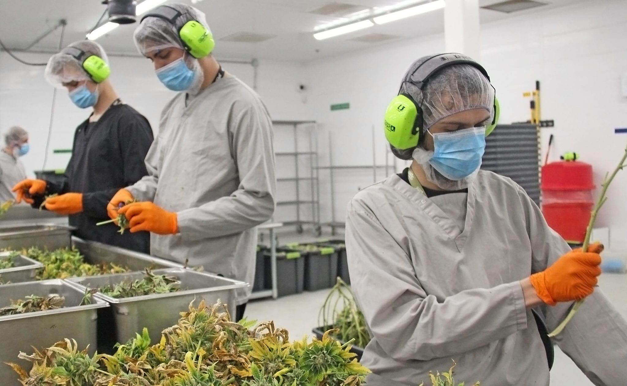 Cannabis JWC job fair