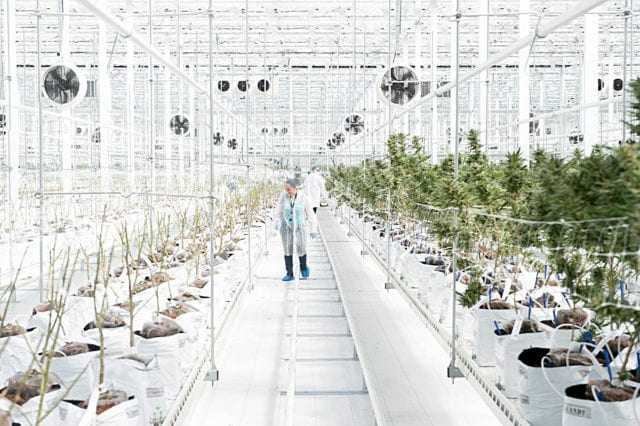 Hexo Corp. Pushes Back Against Black Market by Launching Low-Cost Cannabis Product
