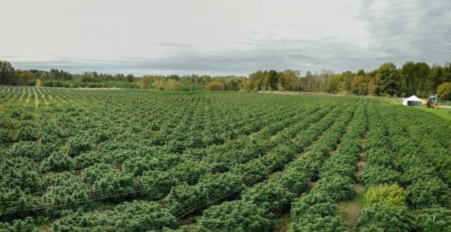 Aleafia Health's First Outdoor Crop Produces Cheapest Cannabis in Country