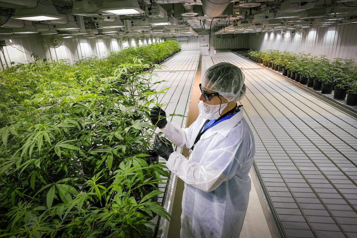 Investors Dump Aurora Cannabis Stock After Ugly Q1 Report