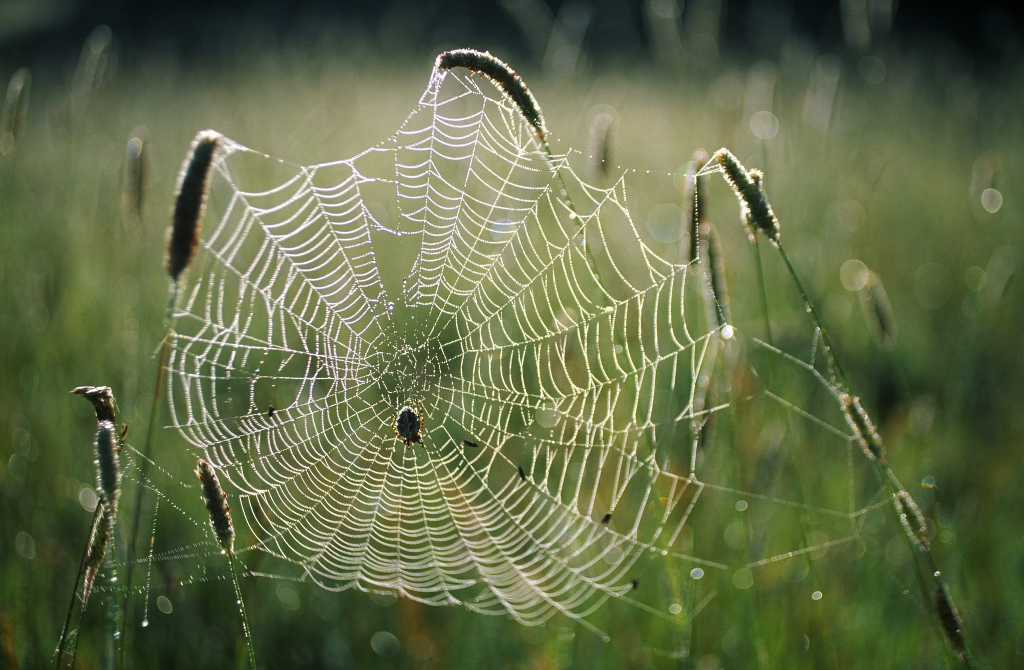 Shareholders Try to Escape Charlotte's Web After Q3 Earnings Report