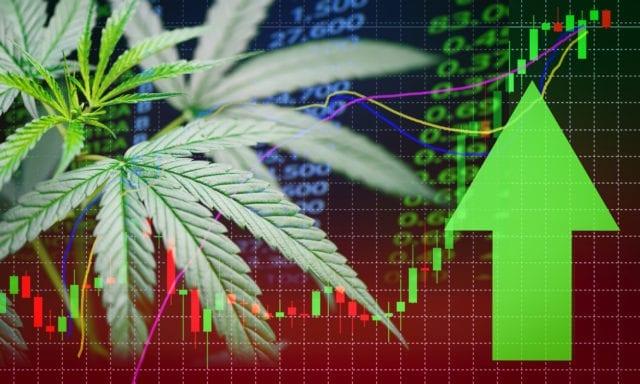 cannabis pot stocks cantor