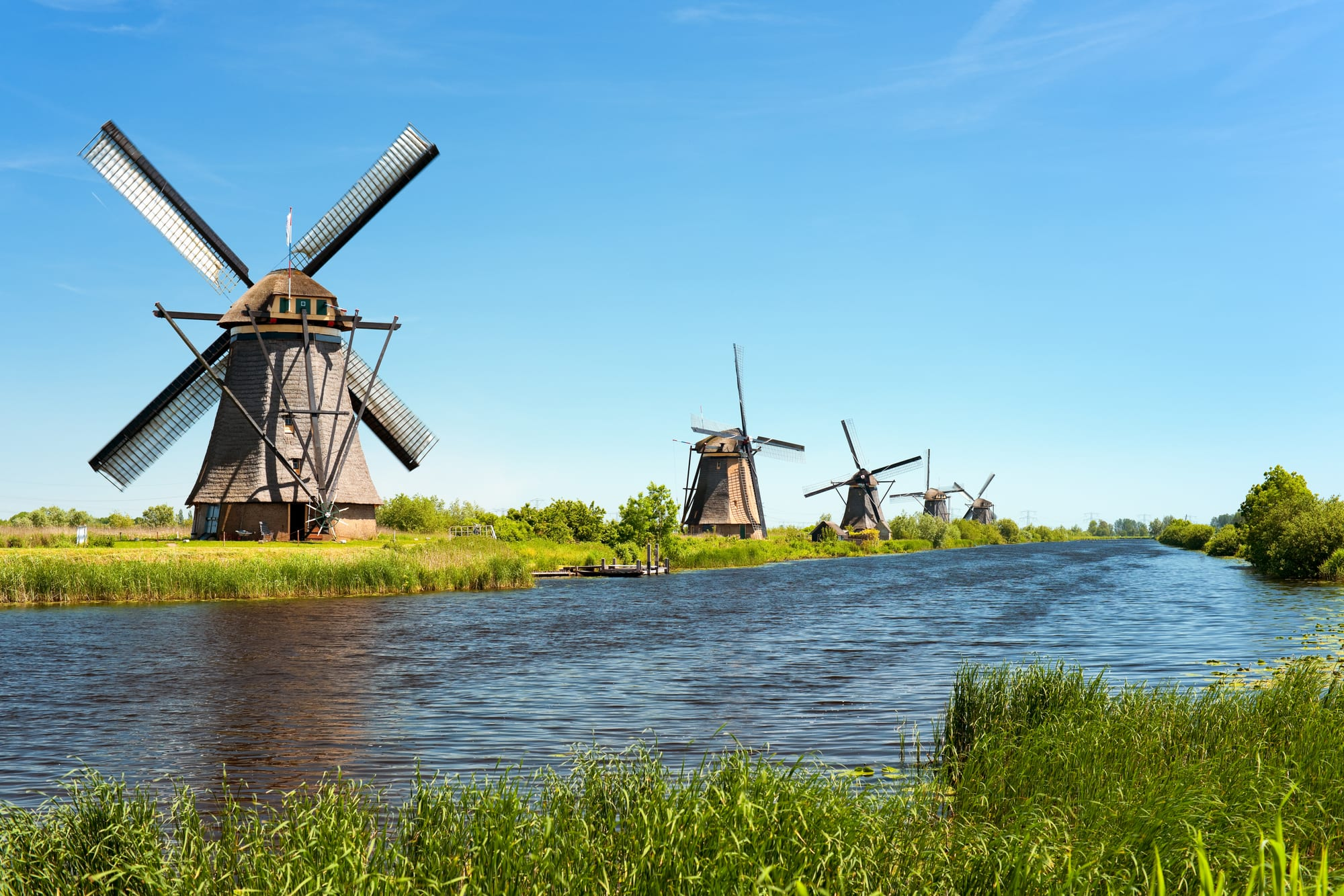 The Green Organic Dutchman TGOD