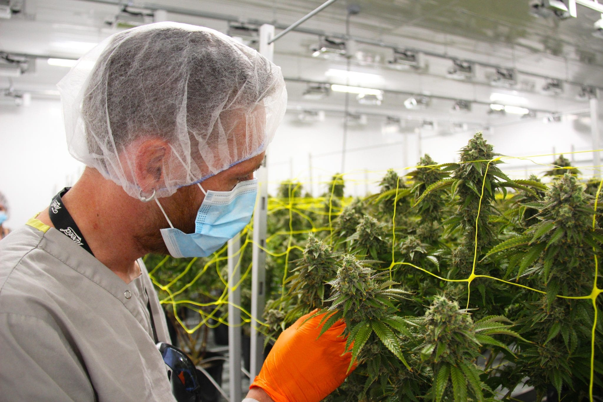 Canopy CEO Points Finger at Ontario Government as Shares Plummet