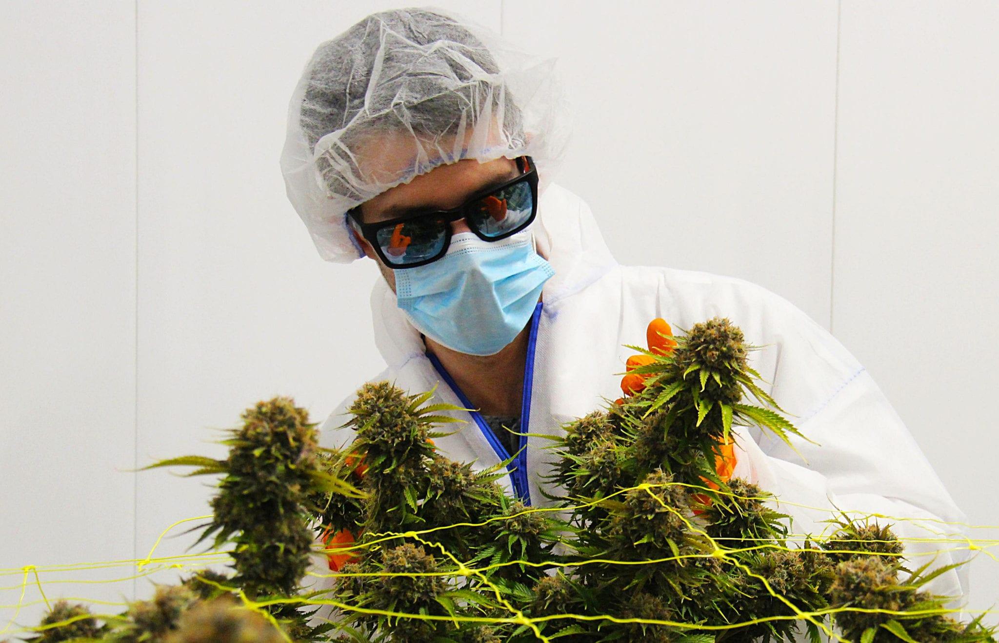 Canopy Growth lends TerrAscend $80.5 million