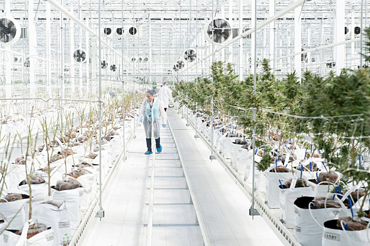 Hexo Shares on Rollercoaster Ride After Company Reveals Unlicensed Cannabis
