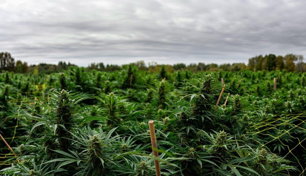 Aleafia Health makes $7.1 million selling Canada's cheapest weed