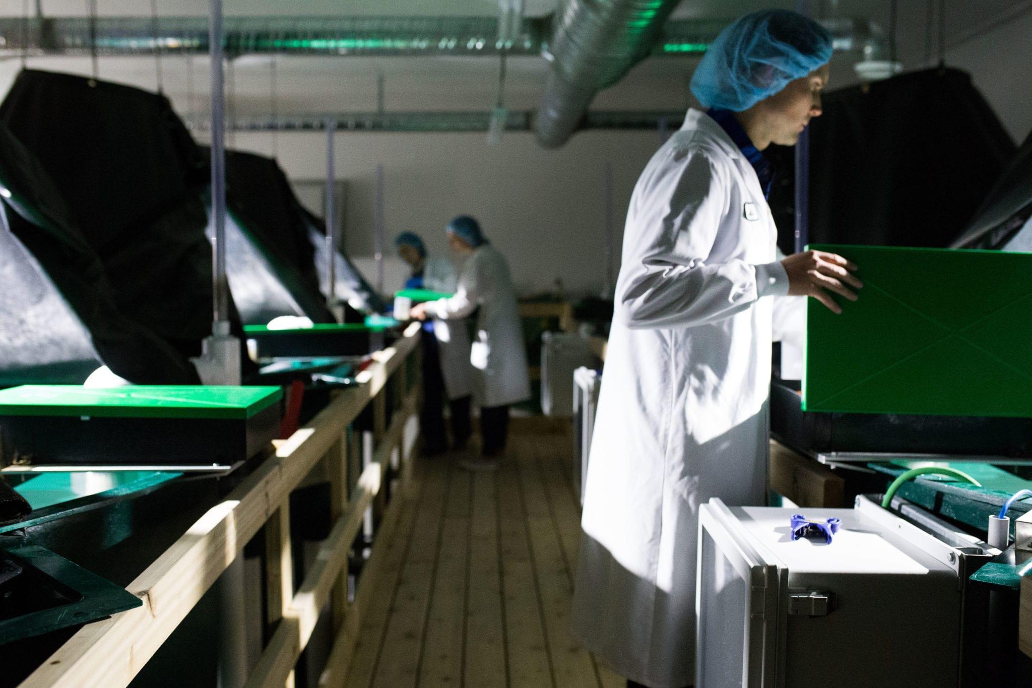 aquaponics cannabis and coho salmon production at Habitat Craft Cannabis