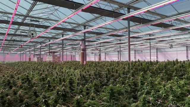 https://mk0muggleheadfl9s2sr.kinstacdn.com/wp-content/uploads/2019/12/Rubicon-Organics-signs-distribution-deal-for-new-premium-weed-acquires-new-genetics-640x360.jpg