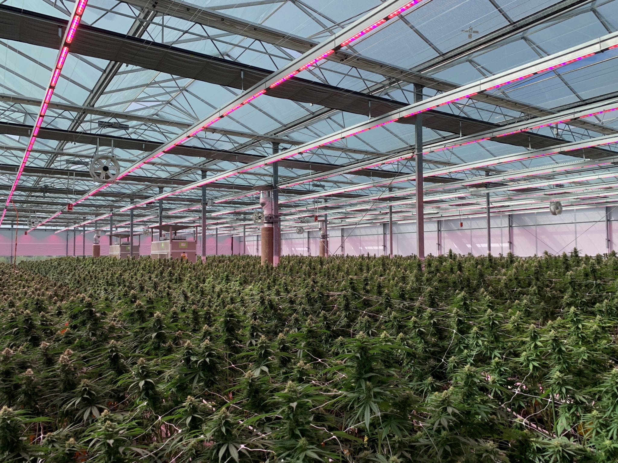 Rubicon Organic's Delta grow facility - Rubicon Organics signs distribution deal for new premium weed, acquires new genetics