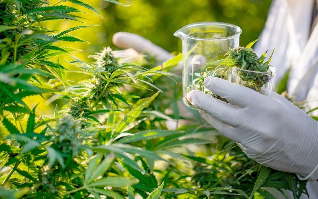 Biotech company funds medical cannabis research into MS, Alzheimer's and Huntington's disease
