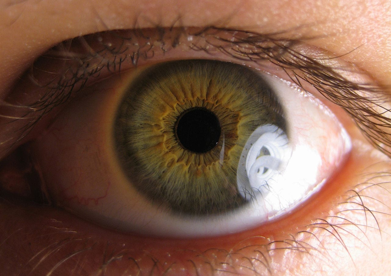 Cannabinol (CBN) the main ingredient in potential treatments for glaucoma and a rare skin disease - picture of an eyeball close up