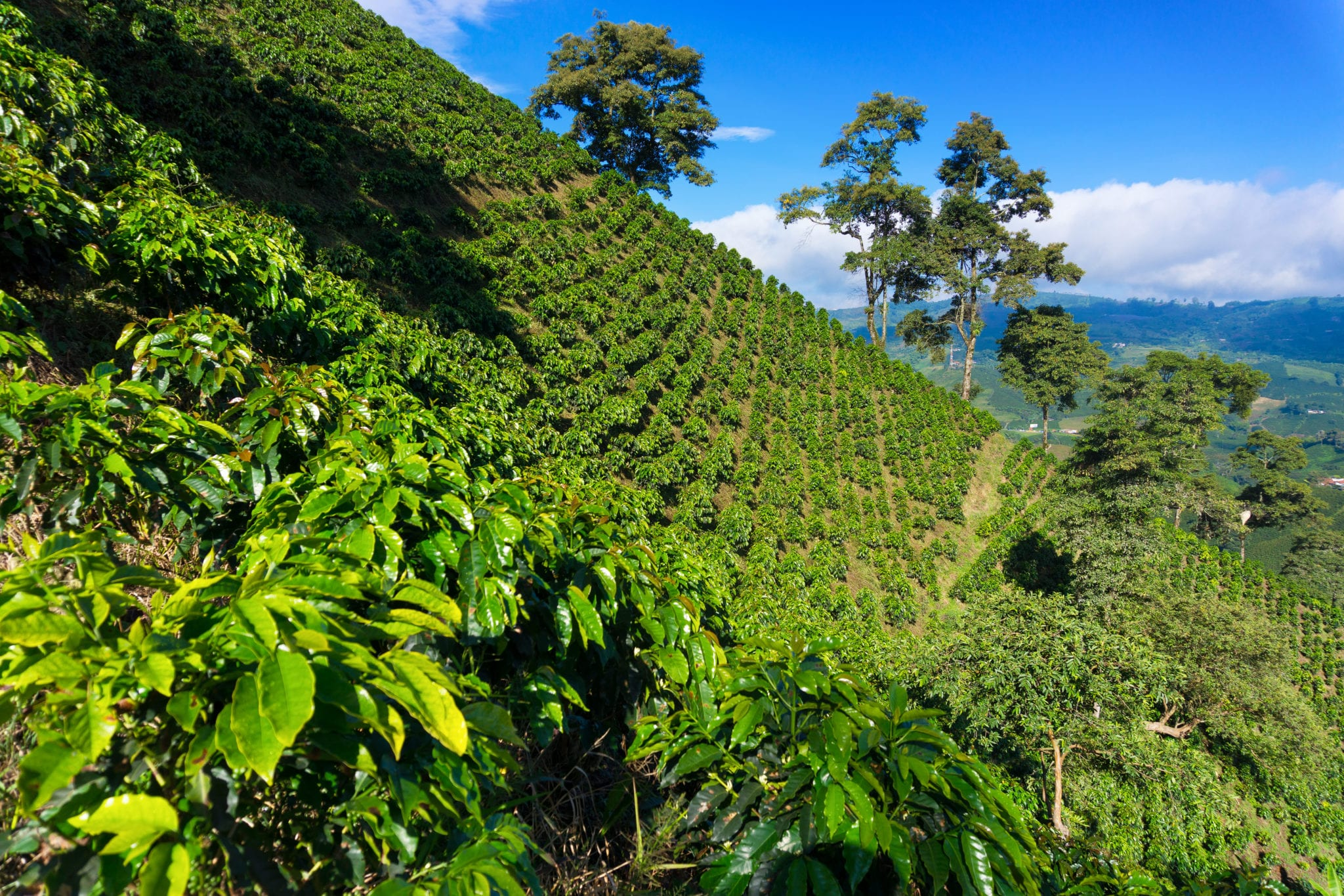 Ikänik Farms first in Colombia to gain GMP certification to grow and process cannabis