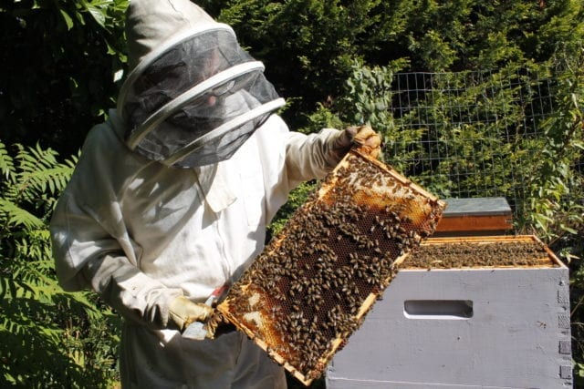 Vancouver entrepreneur Stephen Sandve holds out a tray heavy with honey. His one-man company, East Van Bees, produces urban honey. Photo by Michelle Gamage.