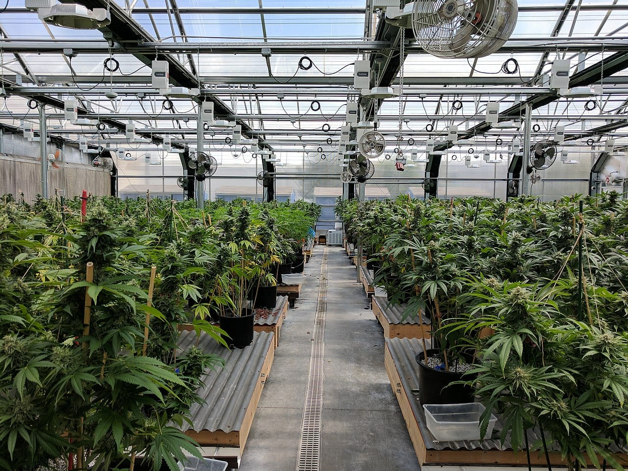 Innovative Industrial Properties announces public offering of 2 million shares - cannabis greenhouse