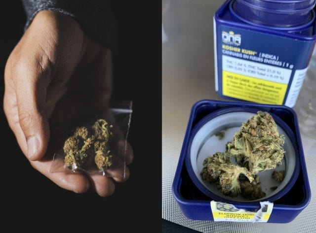 Illicit pot market now 44% cheaper than legal industry: StatsCan