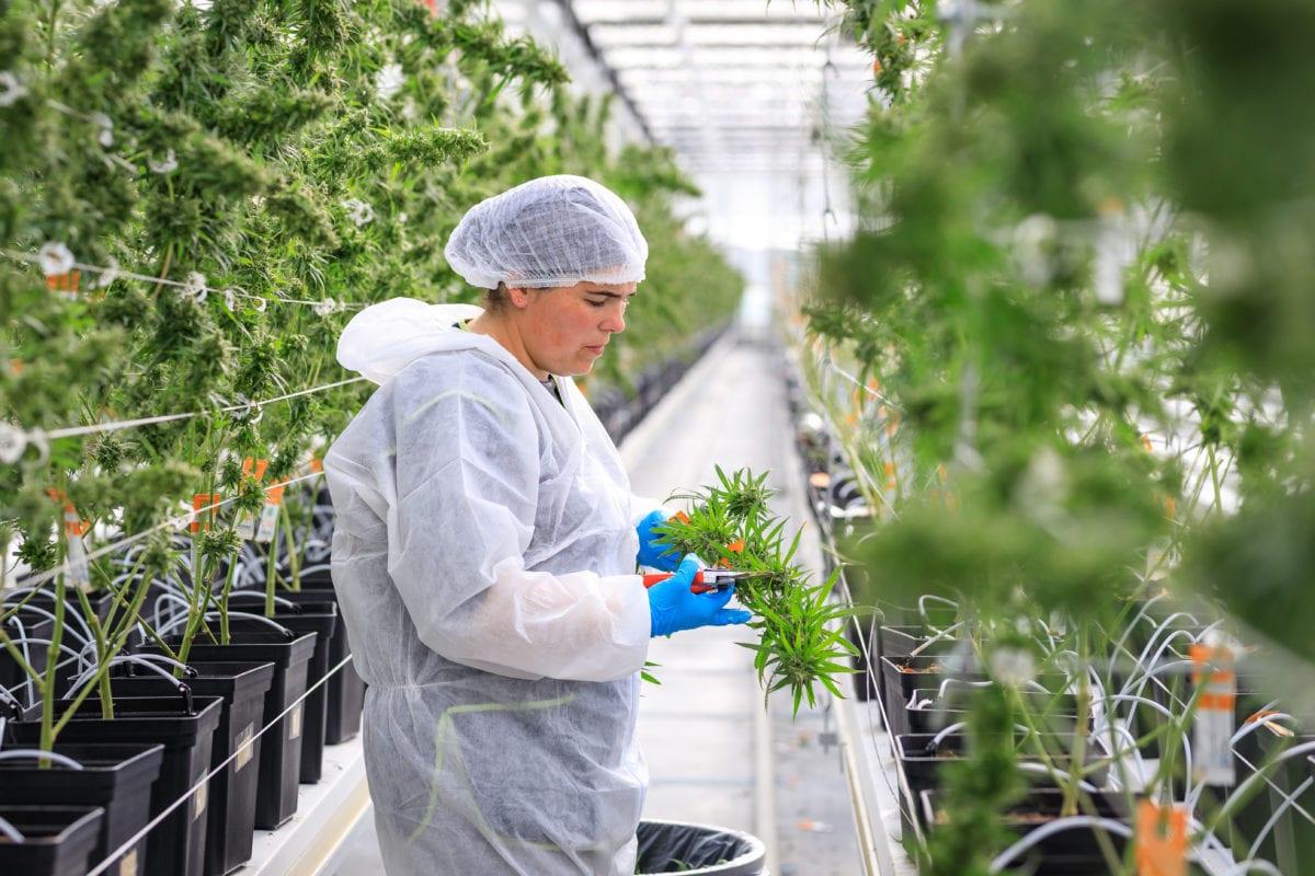 Cannabis market will triple by 2024, pot stocks will rebound: report