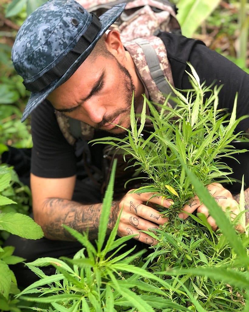 Cannabis in Colombia company Founder Manolo Rivera