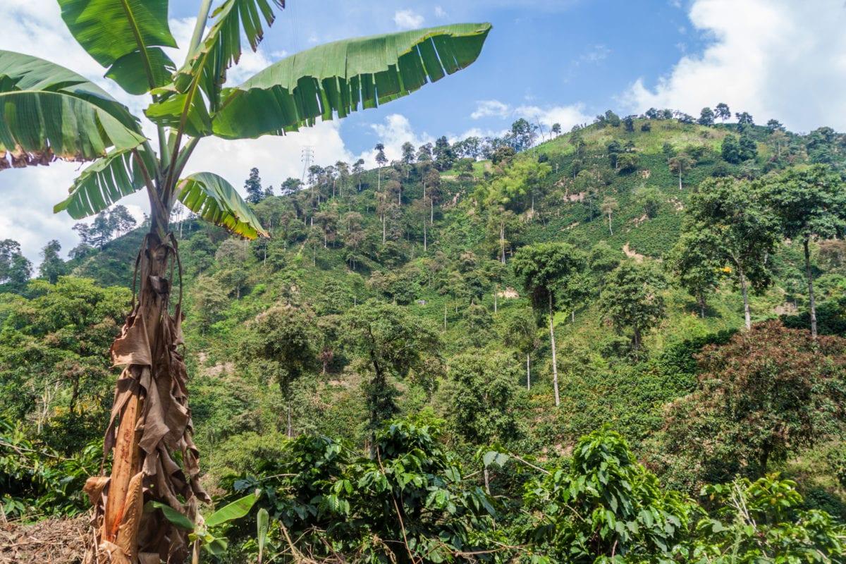Colombia cannabis operator Ikänik Farms to go public in Q2