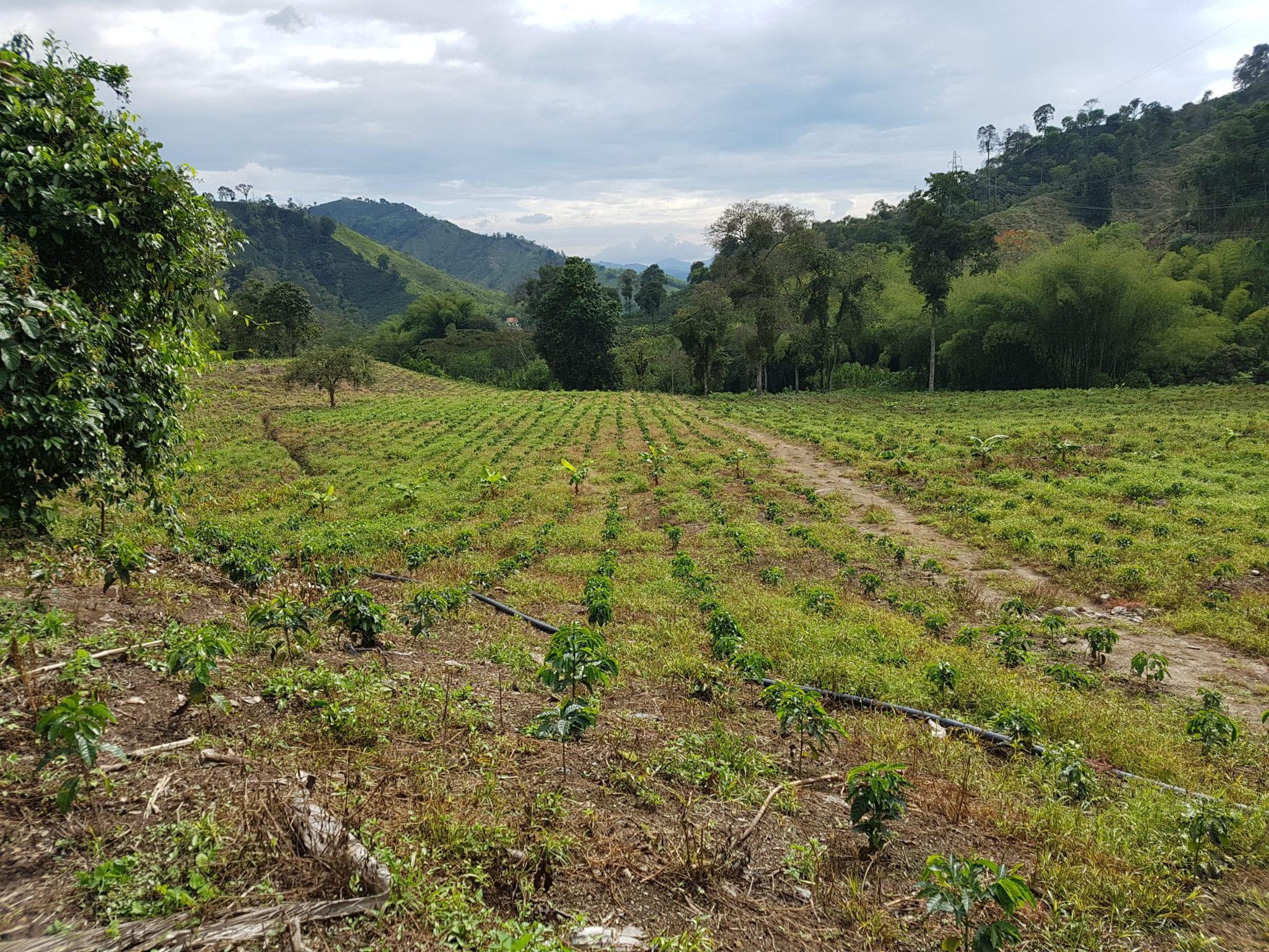 PharmaCielo - coffee farm near Manizales
