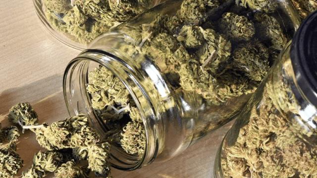 https://mugglehead.com/wp-content/uploads/2020/04/Cannabis-jar-from-Cannabis-NB-640x360.png