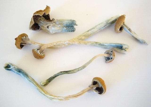 Psychedelics can be used to heal trauma, PTSD and addiction