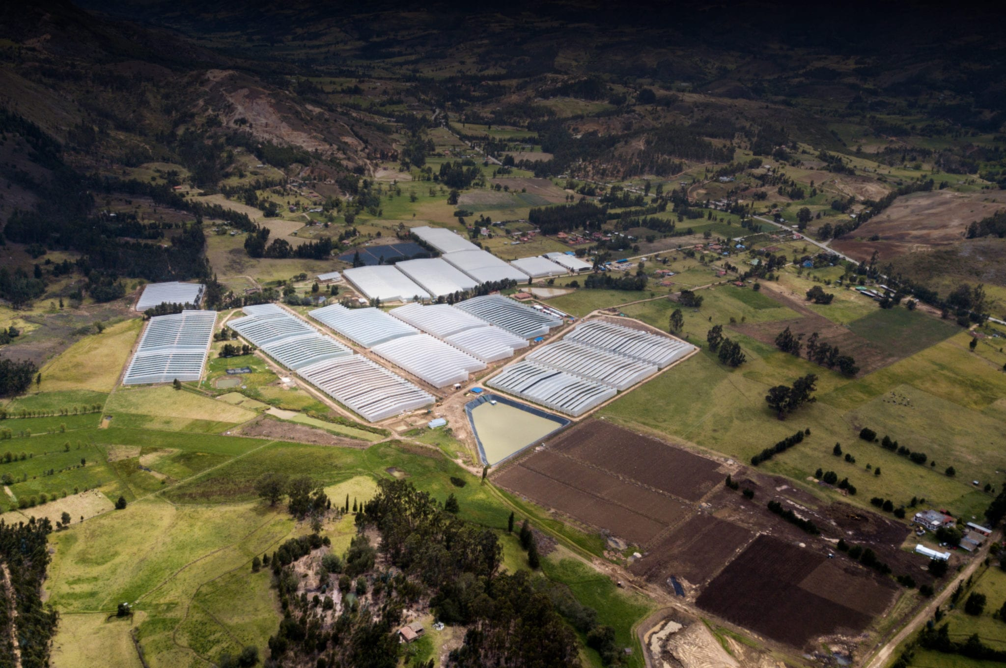Canopy keeps one toe in Colombia, inks regional supply deal